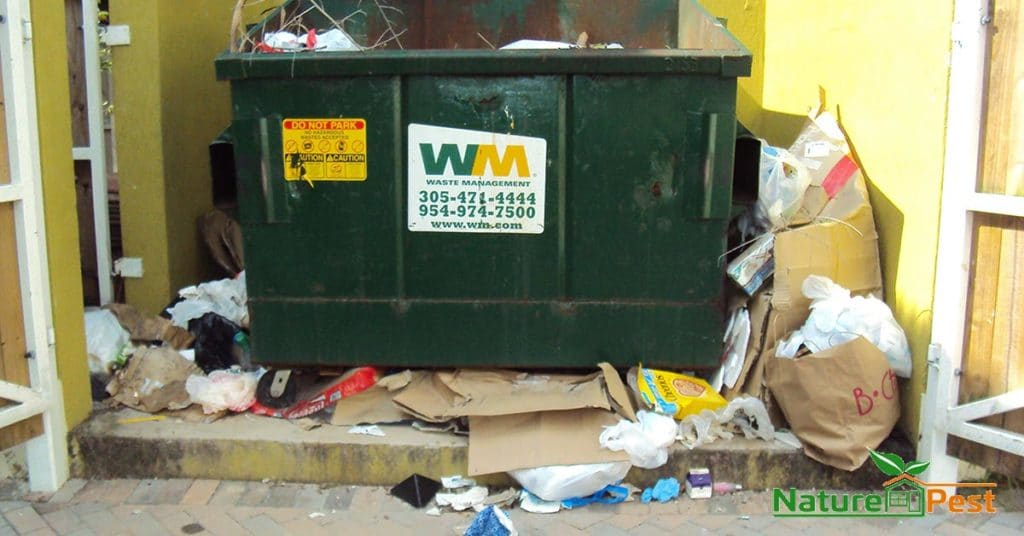 Overflowed Dumpster Attracts Rodents